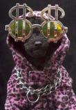 знак щенка доллара Стоковая Фотография