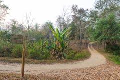 Знак для дороги в лесе Стоковое Изображение RF