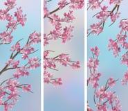 Знамена Сакуры вишни весны стоковое фото rf