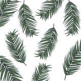 Знамя вектора лета с листьями ладони Стоковое Изображение