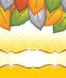 Знамя вектора причудливых листьев Стоковое Изображение RF
