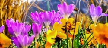 Знамя весны предпосылки Стоковые Изображения RF