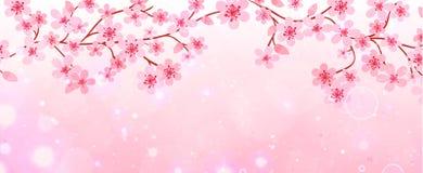 Знамя ветвей с вишневыми цветами Стоковая Фотография