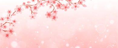 Знамя ветвей с вишневыми цветами Стоковые Изображения RF