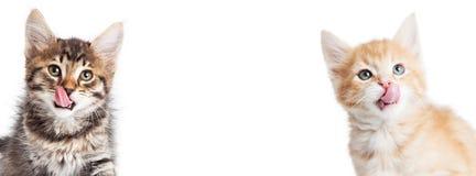 Знамя 2 голодных котят горизонтальное Стоковое Изображение RF