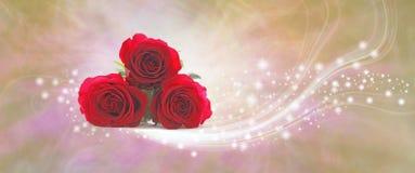 Знамя искры красных роз сюрприза дня ` s матери Стоковая Фотография