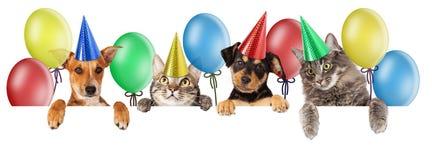Знамя кота и собаки дня рождения Стоковые Фото