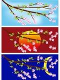 Знамя магнолии весны Стоковые Фотографии RF