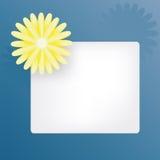 Знамя маргаритки Стоковое Фото