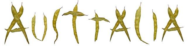 Знамя названия Австралии листьев камеди евкалипта Стоковые Фото