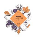 Знамя нарисованное рукой сбора осени приносить, овощи Стиль вектора выгравированный годом сбора винограда Тыква, слива, дуб, mapp Стоковое Изображение RF