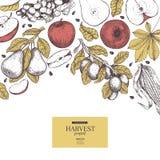 Знамя нарисованное рукой с фруктами и овощами сбора осени Стиль вектора выгравированный годом сбора винограда Яблоко, виноградина Стоковое фото RF