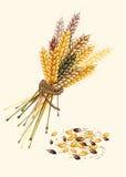 Знамя от зрелой пшеницы Стоковые Изображения