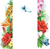 Знамя от тропических цветков и листьев Стоковое Изображение