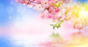 знамя предпосылки цветет формы меньшяя розовая спираль Стоковое фото RF