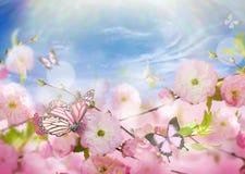 знамя предпосылки цветет формы меньшяя розовая спираль Стоковая Фотография RF