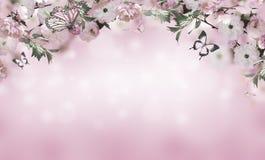 знамя предпосылки цветет формы меньшяя розовая спираль Стоковое Изображение RF