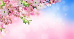 знамя предпосылки цветет формы меньшяя розовая спираль Стоковые Фото
