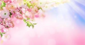 знамя предпосылки цветет формы меньшяя розовая спираль Стоковые Фотографии RF