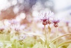 знамя предпосылки цветет формы меньшяя розовая спираль Стоковое Изображение