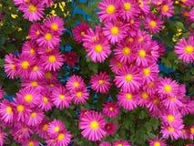 знамя предпосылки цветет формы меньшяя розовая спираль Стоковая Фотография