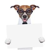 Знамя собаки босса Стоковое Изображение RF
