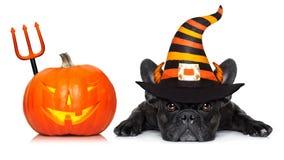 Знамя собаки хеллоуина Стоковая Фотография RF