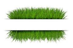 Знамя с зеленой травой Стоковые Изображения RF