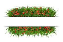 Знамя с зеленым маком красного цвета grassand Стоковая Фотография