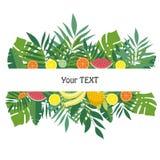 Знамя с плодоовощами и листьями Дизайн для шаблона предпосылки, материалов рекламы, ярлыков, упаковывая Стоковое Изображение