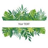 Знамя с тропическими листьями Дизайн для шаблона предпосылки, материалов рекламы, ярлыков, упаковывая Стоковое Изображение RF