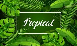 Знамя с тропическими листьями ладони Экзотические тропические заводы Иллюстрация природы джунглей Стоковая Фотография