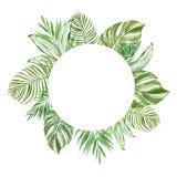 Знамя тропических листьев акварели круглое с космосом для текста, изолированным на белой предпосылке Зеленые экзотические заводы иллюстрация вектора