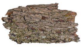 Знамя дуба леса изолированное grunge Стоковое Изображение