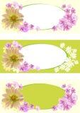 знамя флористическое Стоковое Изображение
