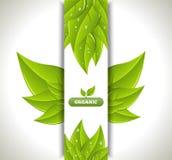 Знамя Eco иллюстрация вектора