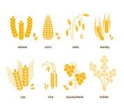 Значки вектора зерен хлопьев рис, пшеница, мозоль, овсы, рожь, ячмень бесплатная иллюстрация