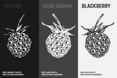 Значки ежевики руки вычерченные r иллюстрация штока