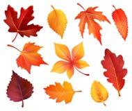 Значки лист листвы осени листьев вектора падая иллюстрация вектора