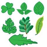 Значки сети, вектор листьев, тропические листья иллюстрация вектора