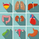 Значки тени внутренних человеческих органов плоские длинные установили с - сердцем, u Стоковые Фотографии RF