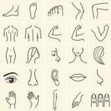 Значки тела Стоковая Фотография RF