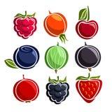 Значки ягод вектора установленные красочные Стоковое фото RF