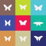 Значок бабочки на предпосылке colorfull стоковое изображение rf