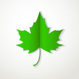 Значок зеленого кленового листа плоский на белой предпосылке Стоковая Фотография