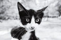 Значок знака Bitcoin в глазах кота Секретный символ валюты и bes стоковое фото