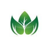 Значок лист здоровья зеленый Стоковое Изображение RF