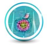 Значок кишечно-желудочного тракта бесплатная иллюстрация