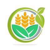 Значок логотипа для руководства бизнесом и развития товаров еды, особенно для пшеницы, органического риса Иллюстрация штока
