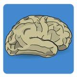 Значок мозга Стоковая Фотография RF